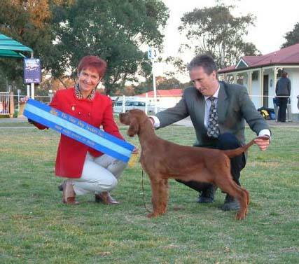 August 2006 - Baby in Show NSW Gundog Society Entry 215