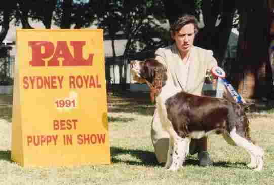 Puppy in Show - Sydney Royal Show. Handled by Joanne Reimer
