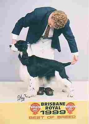 Best of Breed Brisbane Royal Show 1999