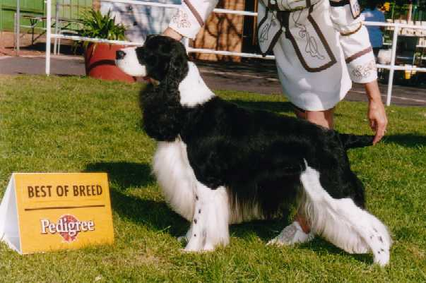 Best of Breed Melbourne Royal Show 2001